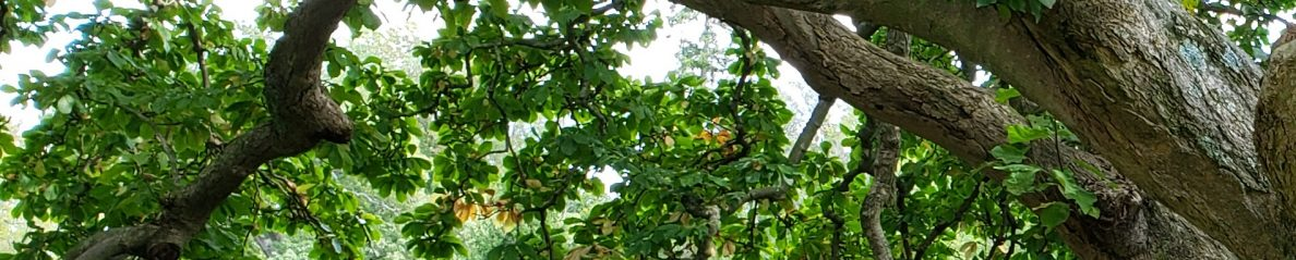 Tree on Hampton Mansion grounds