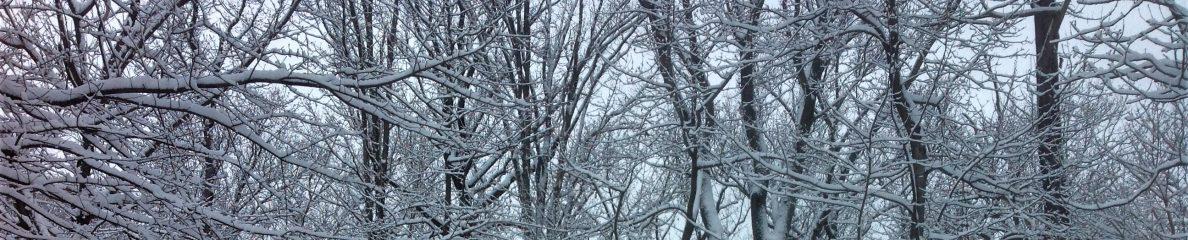 Vic Sanborn image of back yard during snow, Feb 2021, Hampton community