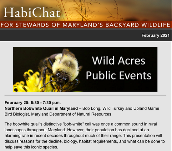 Wild Acres Public Events poster for northern bobwhite quail in Maryland