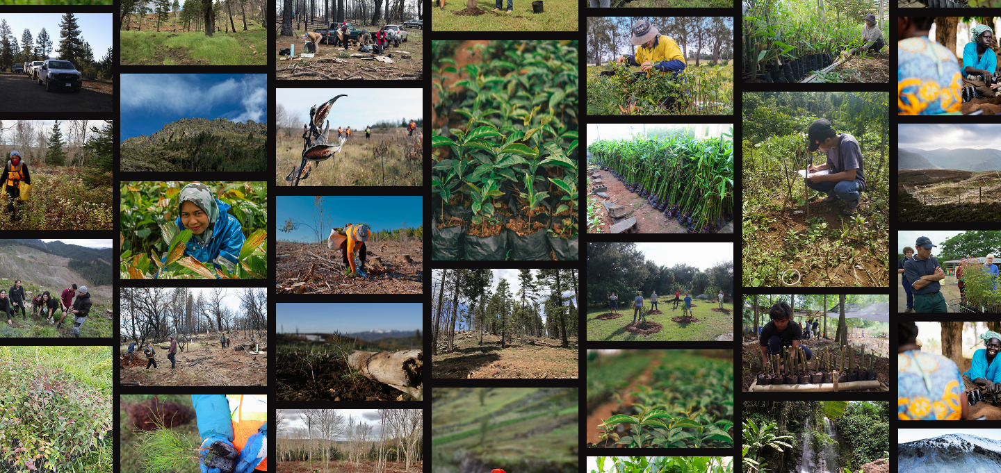 Screenshot of OneTreePlanted photo page with projects the world over