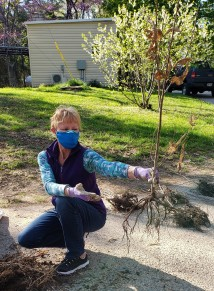 "Linda holds a ""sunshine"" seedling"