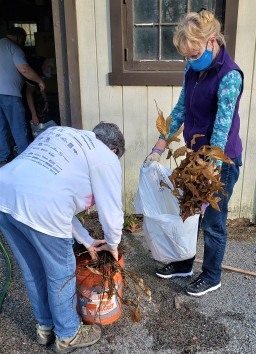 Linda, Carol, Rob, and Richard sorting four sets of chestnuts into each bag, whose roots are properly watered