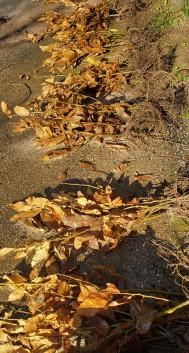 """Bundles of chestnuts labeled """"sunshine"""""""