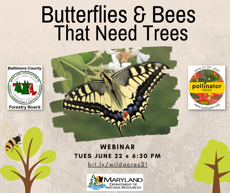 Pollinator webinar poster for Butterflies & Bees That Need Trees