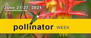 Image of poster for pollinator week