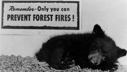 Tiny black bear cub in black and white photo